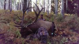 hunt_archery_elk