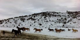 winter_horses_running